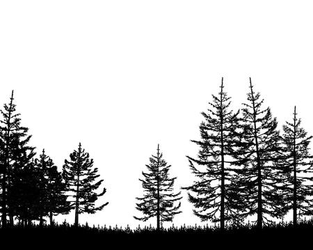fir tree: forest