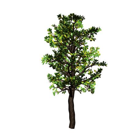 leafage: tree