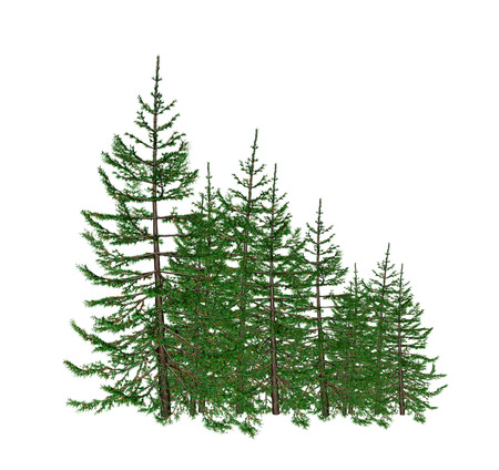 cortex: pine Stock Photo