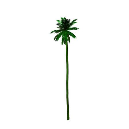 complement: palm