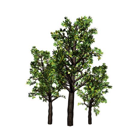 scaffold: tree