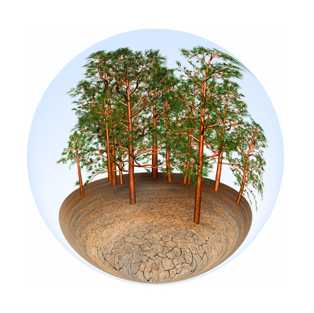 frondage: trees