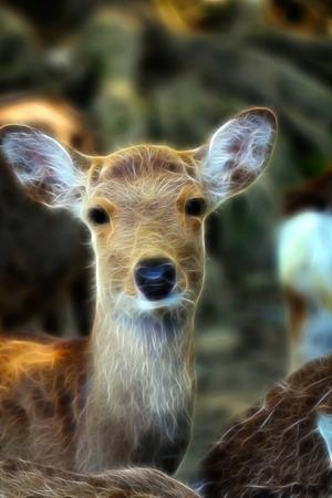 Wild animal, deer.