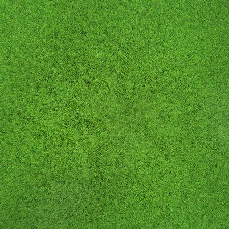 idyllic grass texture Stock Photo - 13320879
