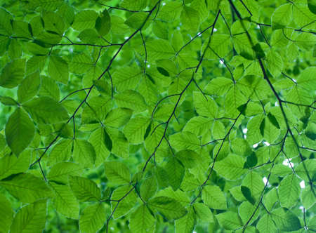 green texture with many leaves Stock Photo - 13355801