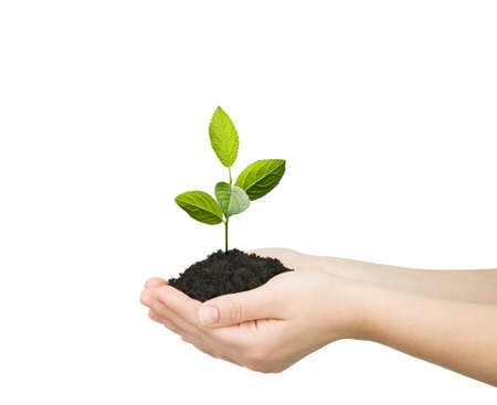 planting: hands holding green plant isolated