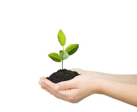 plantando un arbol: tomados de la mano de las plantas verdes aisladas