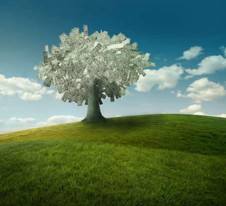 grow money: dollars tree Stock Photo