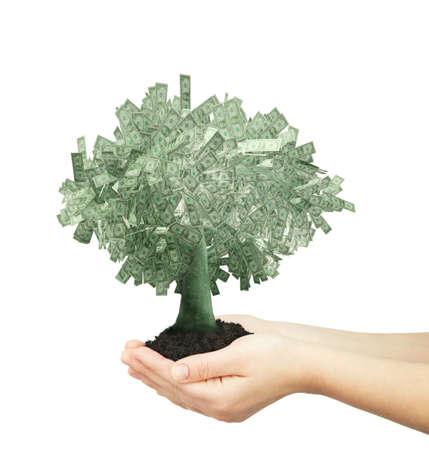 white bacground: dollars tree at white bacground  Stock Photo