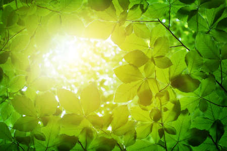 green texture with many leaves Stock Photo - 15714492