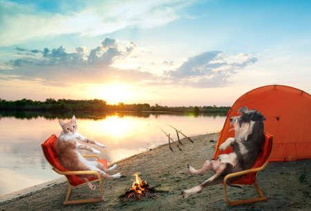 grappige kat en hond kamperen en vissen Stockfoto