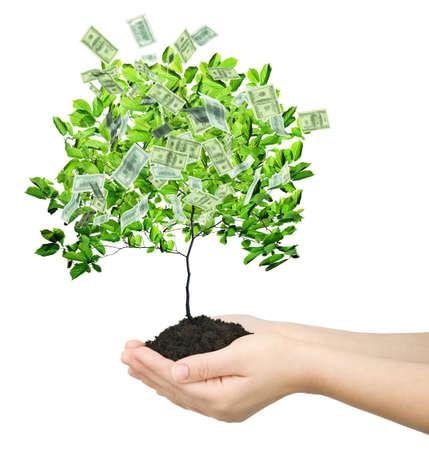 grow money: money tree isolated