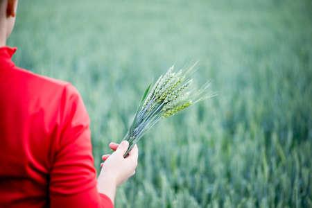 cultivo de trigo: Mujer con orejas de trigo en las manos