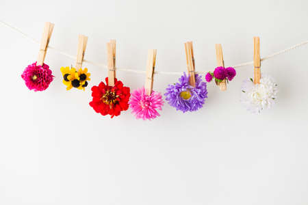 clothespin: summer flowers background Stock Photo