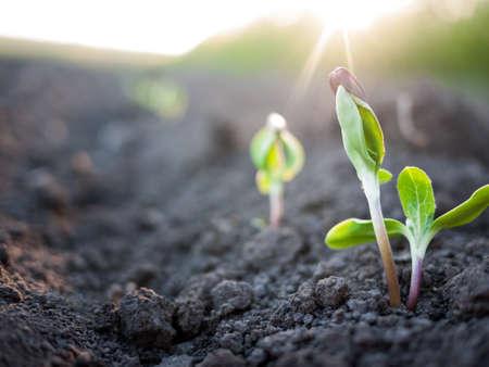 grünen Pflanzen Wachstum Standard-Bild