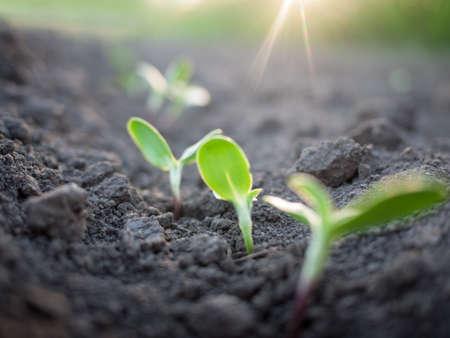 green plants growth Stock Photo