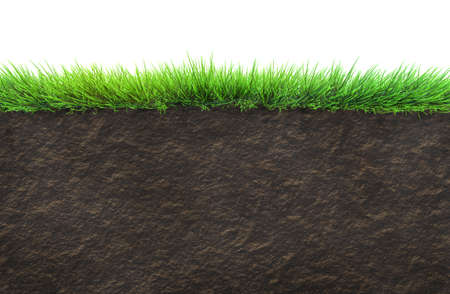 grass and soil isolated photo