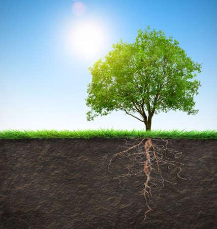 Baum mit Wurzeln Standard-Bild