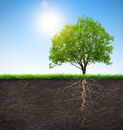 birretes: árbol con raíces