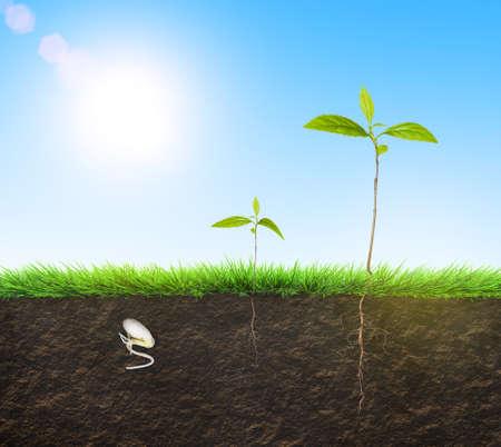 time lapse: seedling time lapse illustration Stock Photo