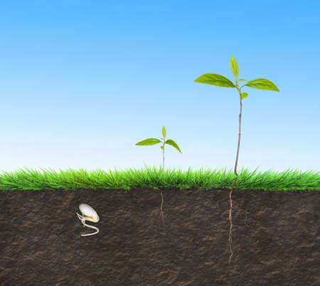lapse: seedling time lapse illustration Stock Photo