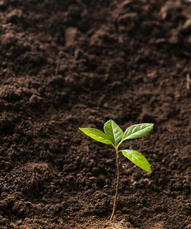 crecimiento planta: el crecimiento de las plantas verdes