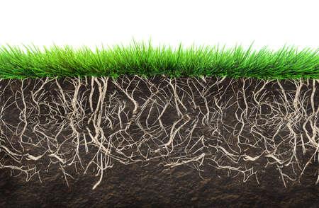 gras en bodem