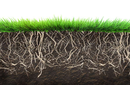 the dirt: grass and soil