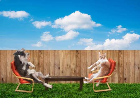 hamaca: divertida del gato y el perro se relaja en el patio trasero
