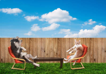 funny cat and dog relaxing at backyard