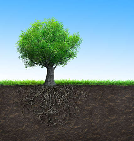 strong roots: tree with roots