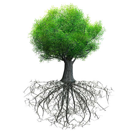 tree isolated with roots Banco de Imagens