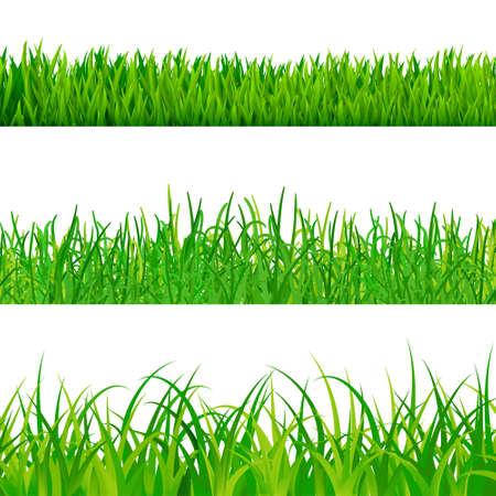 green fields: set of grass vector Illustration