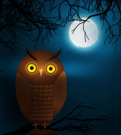 owl at night illustration illustration