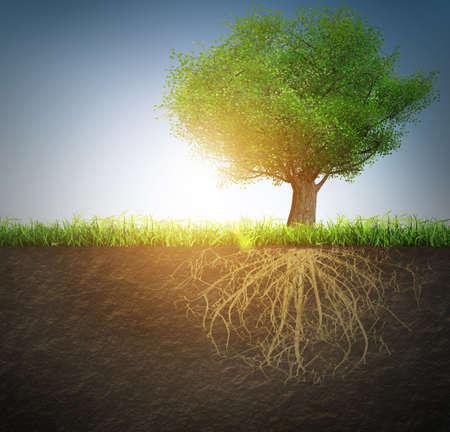 groene boom: boom met wortels