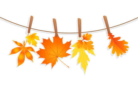 clothespin: autumn leaves with clothespin vector