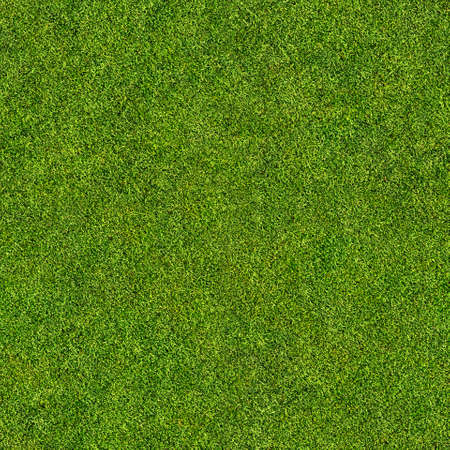 seamless grass texture Stock Photo - 31444145