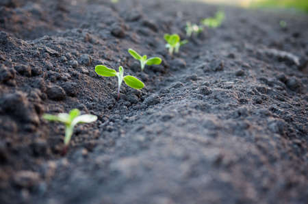 plant seed: green plants growth Stock Photo