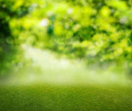 grass background Banco de Imagens - 34293669