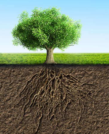 raices de plantas: �rbol con ra�ces y la tierra