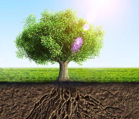 planta con raiz: �rbol con ra�ces y la tierra