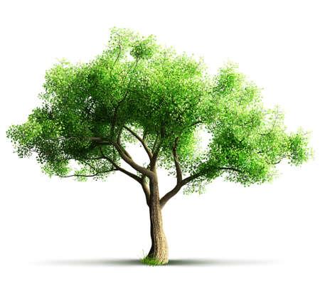 分離されたツリー