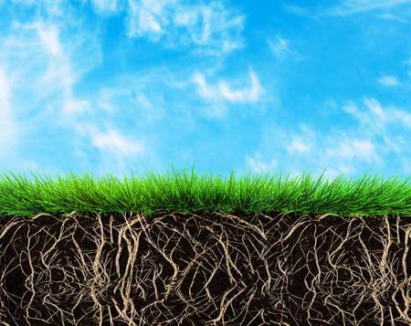 planta con raiz: hierba con ra�ces y la tierra Foto de archivo
