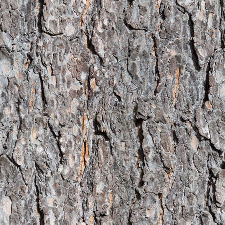 tileable: seamless bark tree texture