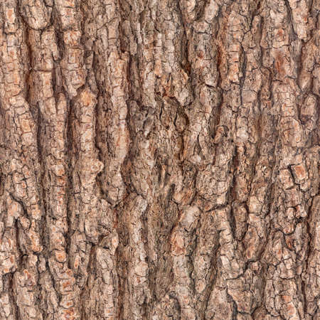 シームレスな樹皮ツリー テクスチャ 写真素材
