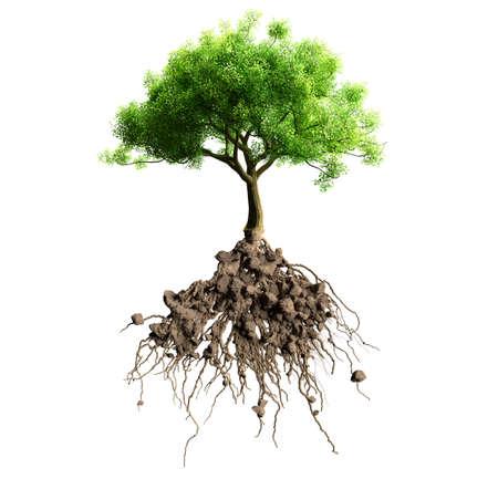 격리 된 뿌리를 가진 나무 스톡 콘텐츠