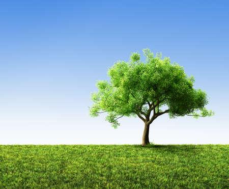 tree with grass Standard-Bild