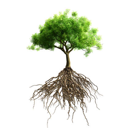 un arbre: arbre avec des racines vecteur