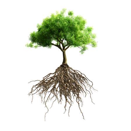 arbol raices: árbol con raíces vectorial