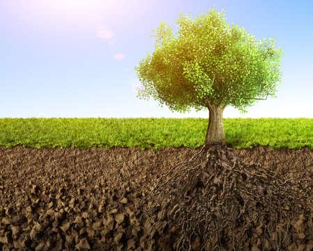 planta con raiz: �rbol con ra�ces Foto de archivo